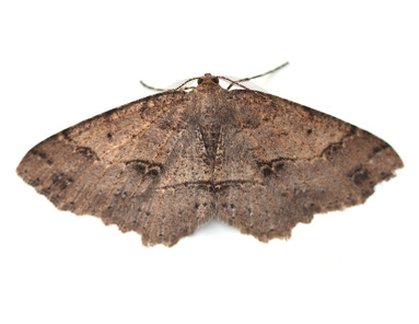 Remove moth problems in Reading