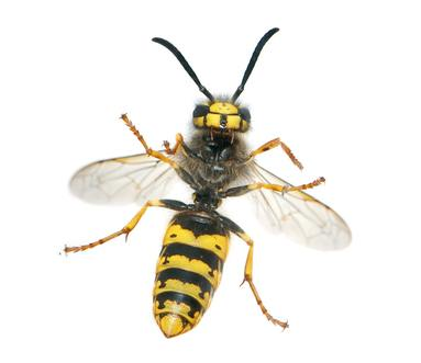 Wasp removal and pest contrtol in Reading